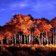 رنگ در نقاشی (رنگهای سیاه و سفید از دیدگاه نور و نقاشی)